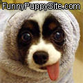Funny Puppy Site
