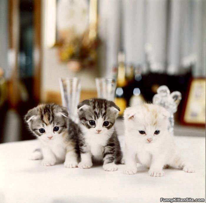 3 little kittens The three cats