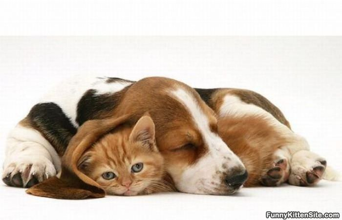 funny puppies and kittens - photo #32