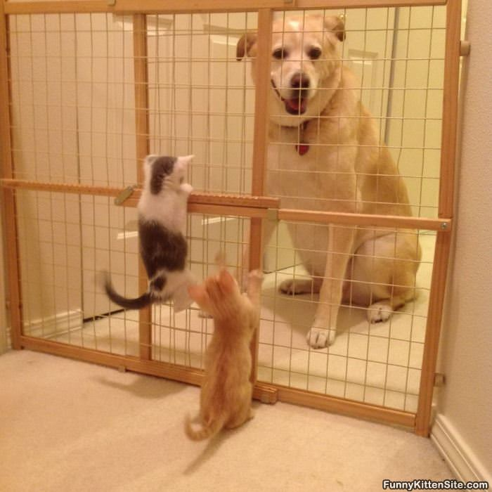 Hey Let Us Out