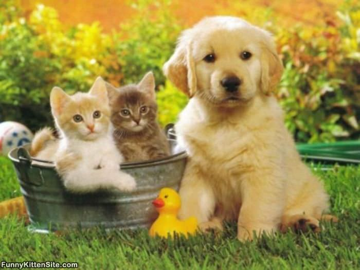 lensclutcolunch: puppy and kittens pictures