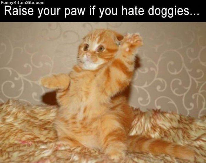 Raise Your Paw