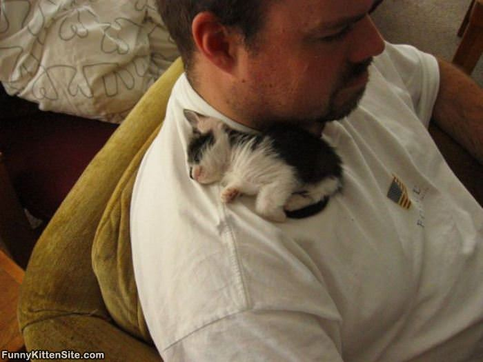 http://www.funnykittensite.com/pictures/The_Kitten_Bed.jpg