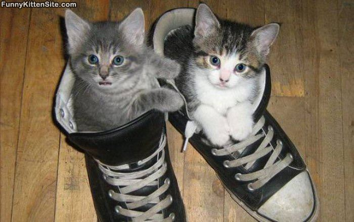 The Sneaker Kitties