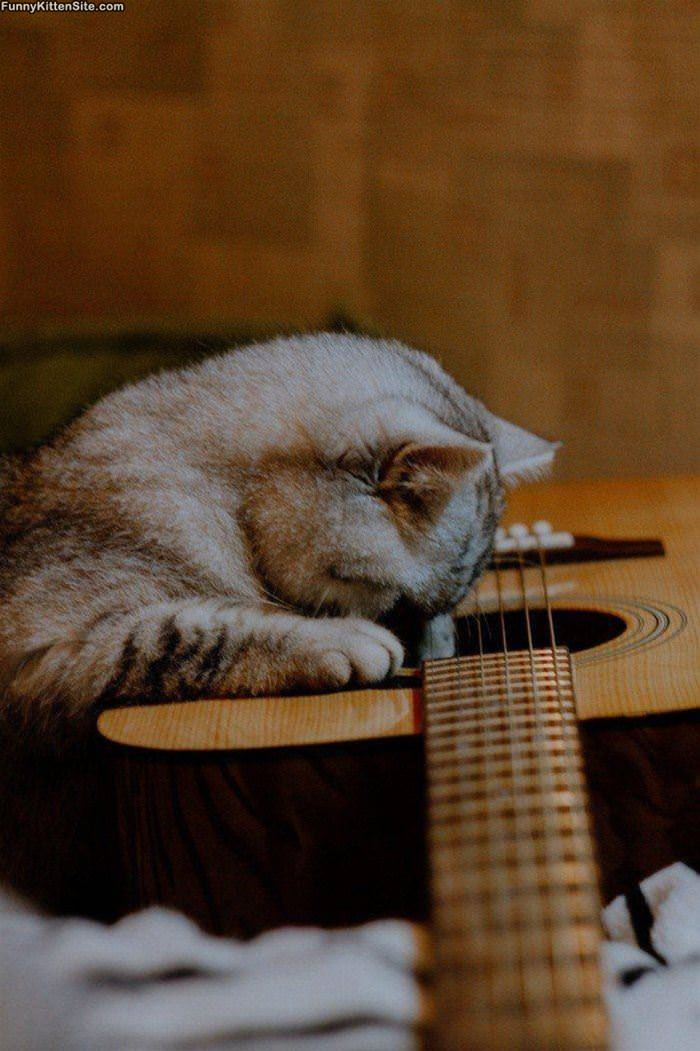 This Cat Loves Guitar