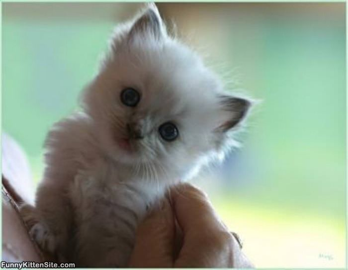 Gallery For gt Cute Tiny Kittens