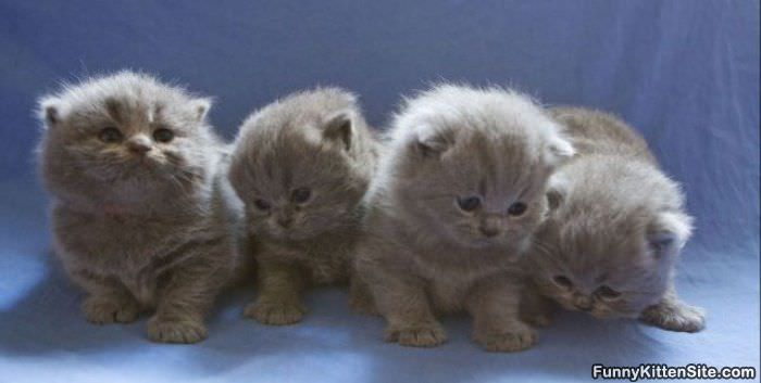 we are all the same   funnykittensite