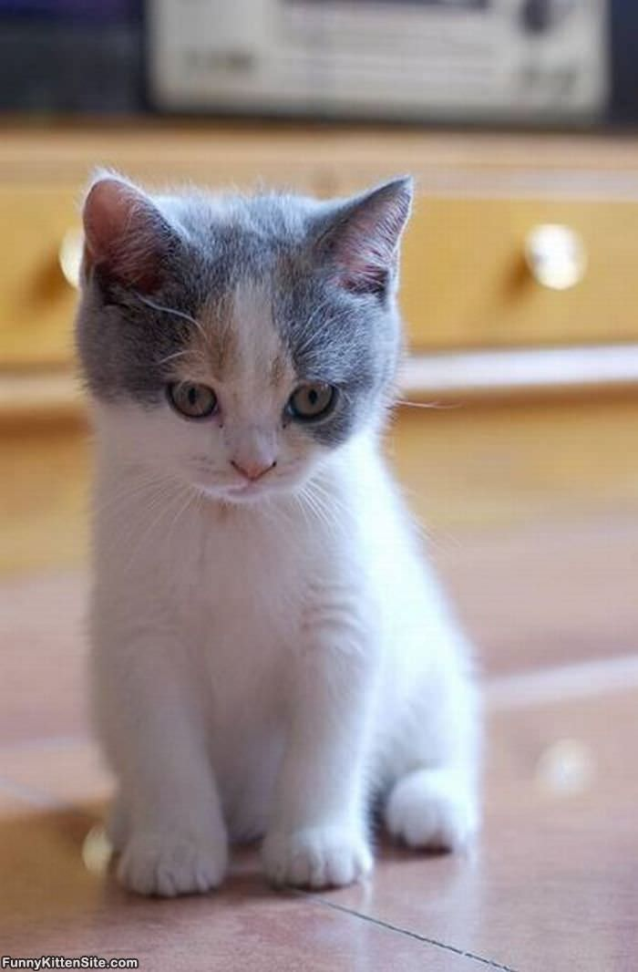 Im So Cute - funnykittensite.com