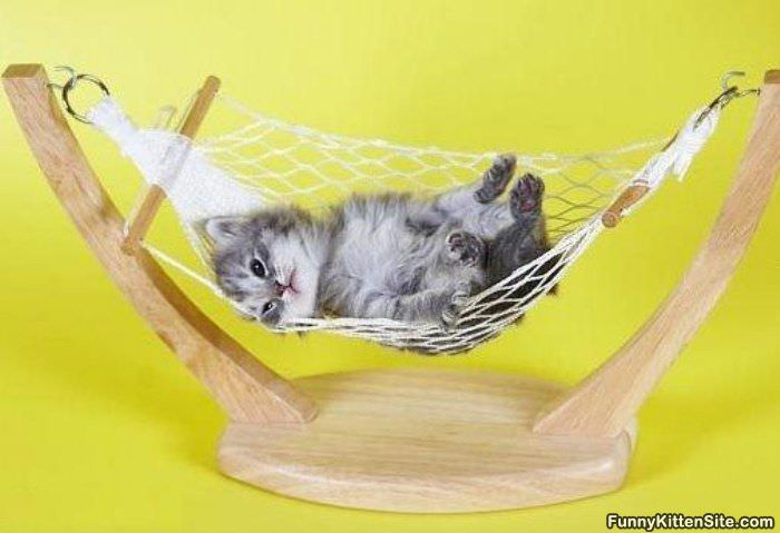http://www.funnykittensite.com/pictures/so_comfy.jpg
