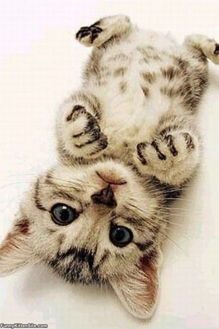 cute kitten picture